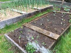 planting IMG_6171