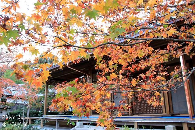 嵐山旅遊景點-常寂光寺19