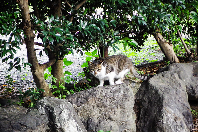 Today's Cat@2016-06-24