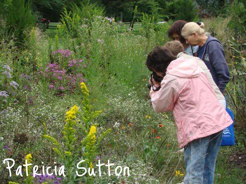 (1) meadow w-sig