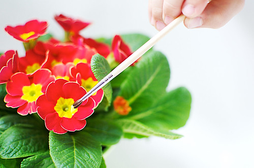Painting a primrose