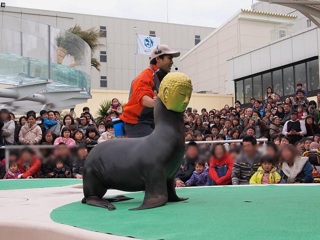 120226サンシャイン水族館アシカお面_ぼかし