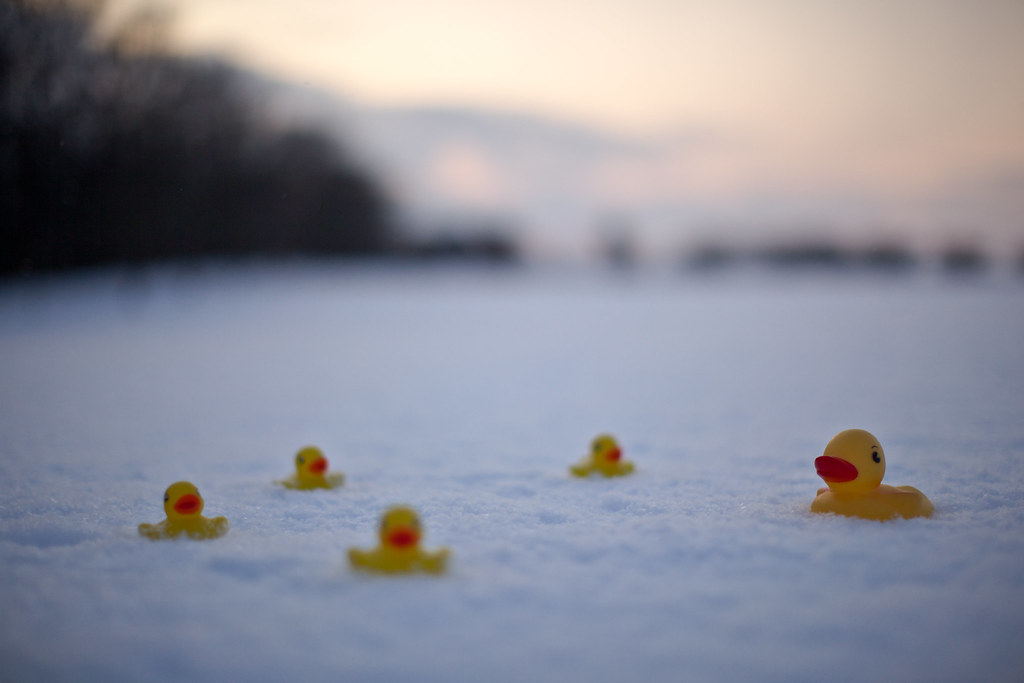 Ducks in the Snow (橡皮小鴨)