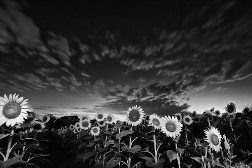 longexposure sky night clouds stars landscape blackwhite cloudy mckeebesherswildlifemanagementareasunflowersmarylandmd