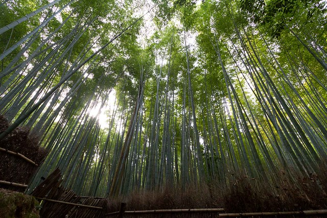 Bamboo Forest3