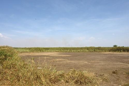 africa nature kenya wetlands kisumu dunga 09locationgeotag 03content