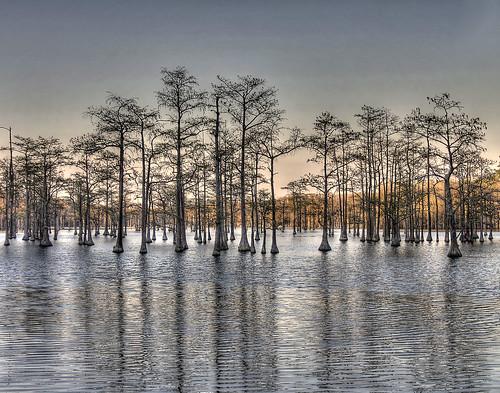 georgia landscape pond blackwater hdr cypresstrees