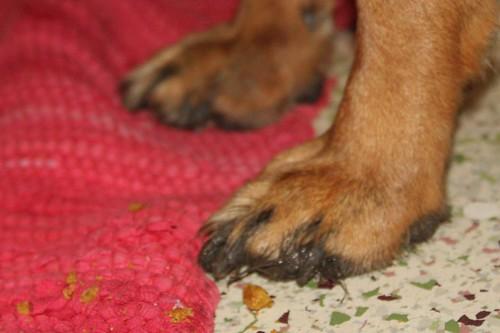 Jasmine-Muddy-Feet