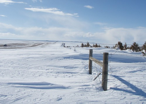 Living Snow Fences help protect roadways in El Paso County from drifting snow during Colorado's harsh winters.