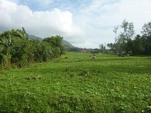 Luzon-Legazpi (3)