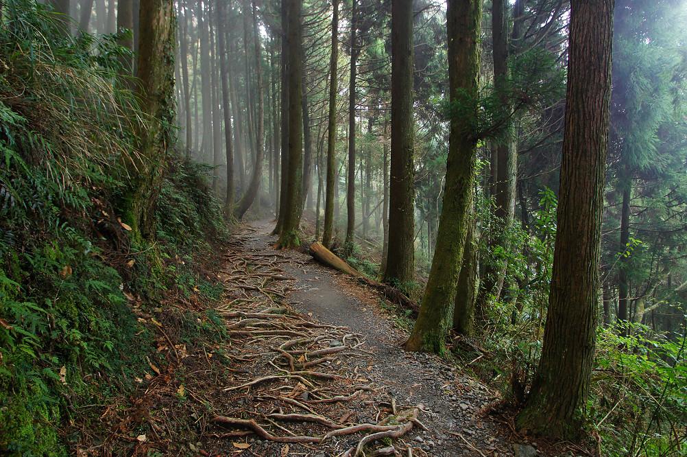 觀霧巨木步道-035