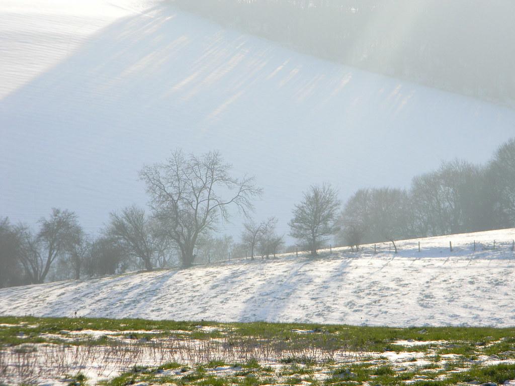 Snowy treeline Saunderton to Bledlow