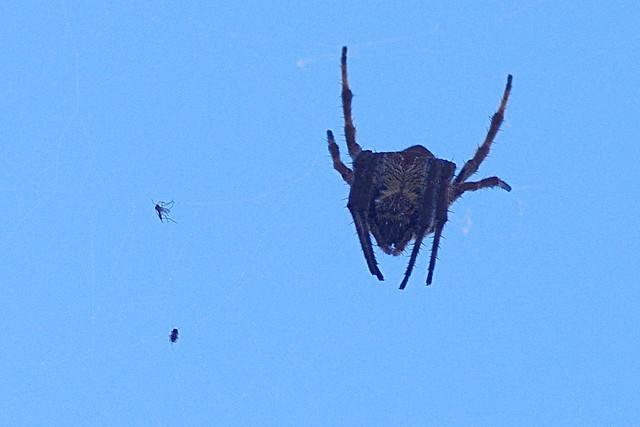 Mr. Spider and his Captives