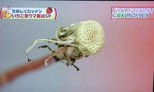 草莓02.JPG