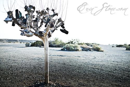 www.erin-stone.com