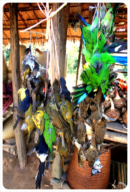 dead birds in a laos market