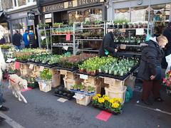 Columbia Road Flower Market