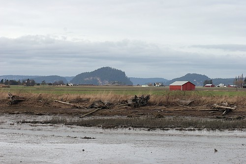 Skagit farmland from Hayton Bird Reserve