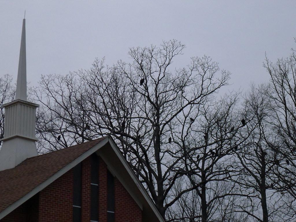 vulture church