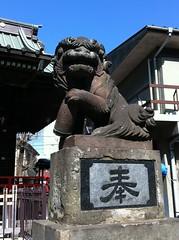 狛犬探訪 武蔵小杉 大戸神社