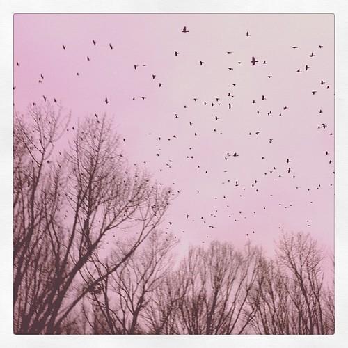 Birds, lots.