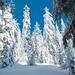 Hex Mountain Snowshoe - Feb 26. 2012