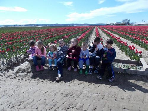 burns watanabe tulips