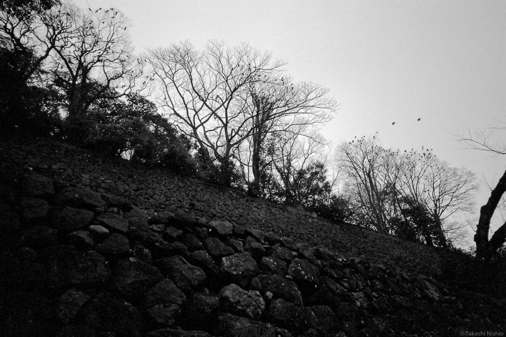 2012-01-24_304_Scan001_06250.jpg