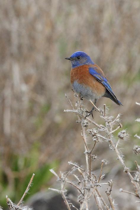 022712_03_bluebird03