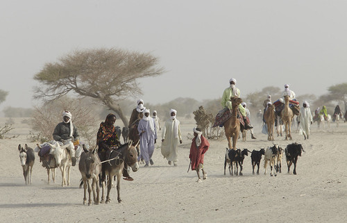 Pastoralists taking their livestock to sell at the market