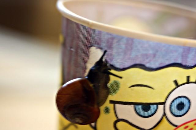 snail - 3