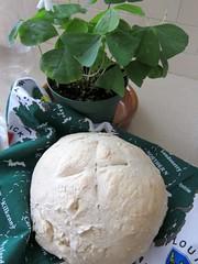 Irish Soda Bread & a Shamrock