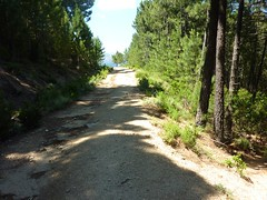 La piste de Solaghu (Solaro) juste au-dessus de Bocca di Cateri