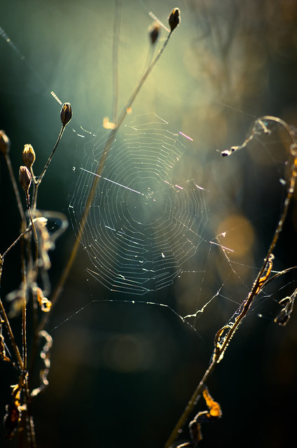 Spider's hideout