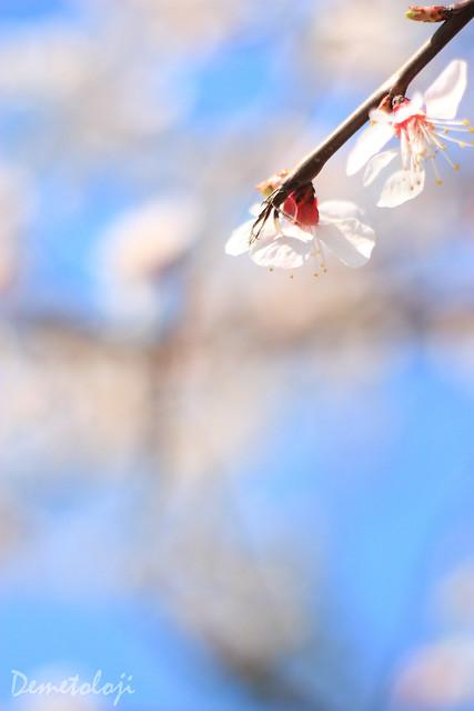 bahar dalları_3