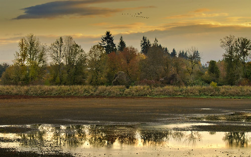 november autumn sunset reflection clouds oregon geese day cloudy dusk flight explore wetlands migration hillsboro 2011 augury jacksonbottom