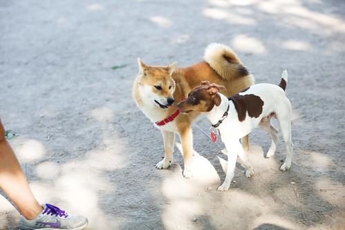 Dog Park 014