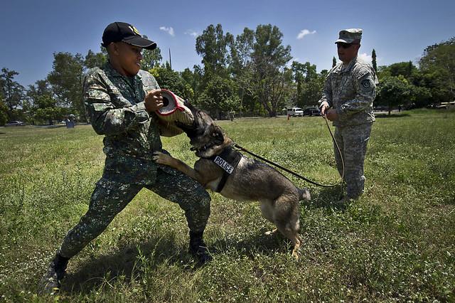 Image Result For Dog Training Richardson