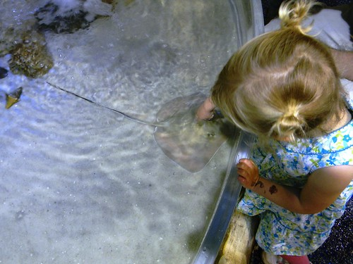 Lucy worked up the courage to touch a ray - she was so proud of herself