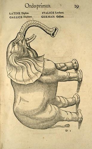 003-Elefante-Icones animalium- (1553)- Conrad  Gesner- SICD Strasbourg