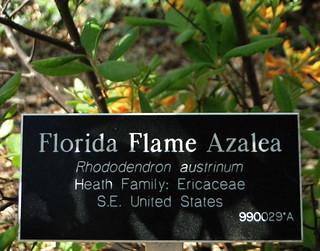 6-77-21apr12_3649_Botanical_garden_azalia