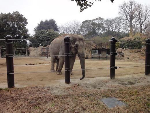 ueno_zoo_2