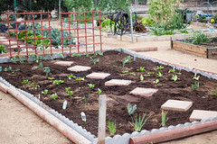 Gardening at the Calimesa Community Garden