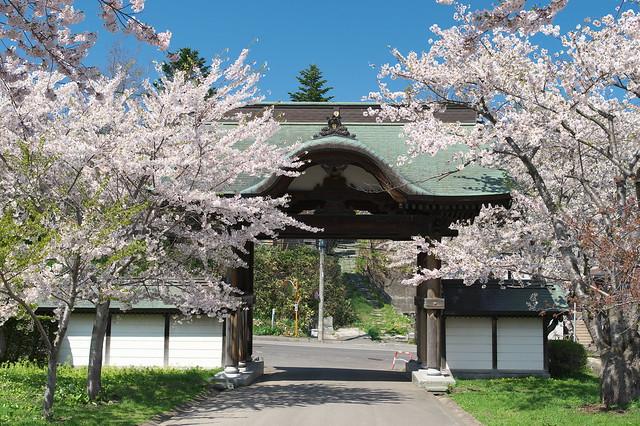 20160508天上寺の桜_06