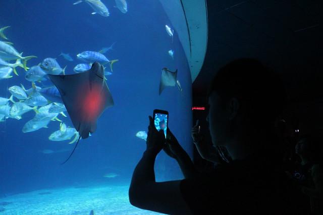 Photo:大洋池 The Open Ocean Aquarium By Chi-Hung Lin