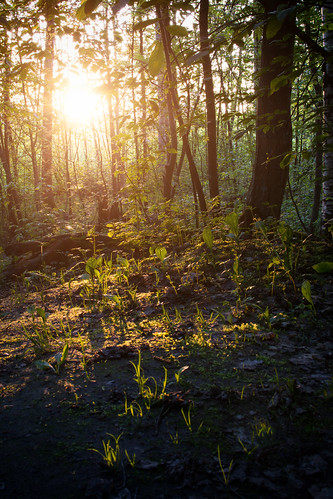trees sunset sun green nature grass forest 35mm suomi finland amazing nikon view photoshoot f18g d3100