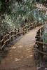 Mabijeong Bamboo