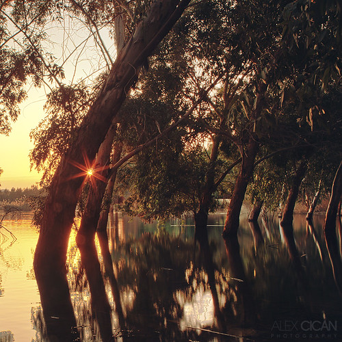 park trees sunset sun forest cyprus flooded nicosia