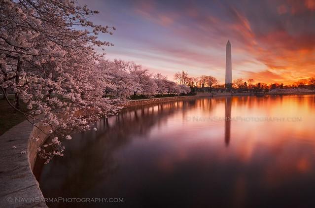 Awakening - Washington DC Cherry Blossom Sunrise