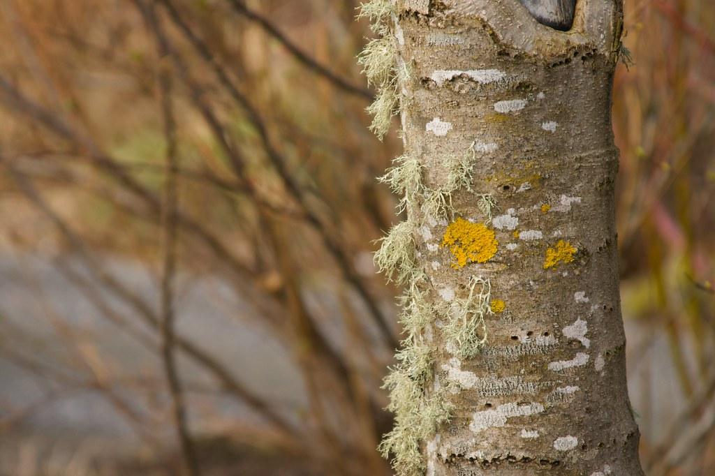 mossy bark  1273